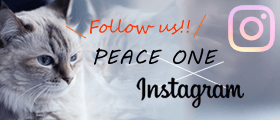 PEACE ONE Instagram
