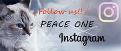 PEACE ONE Instagram